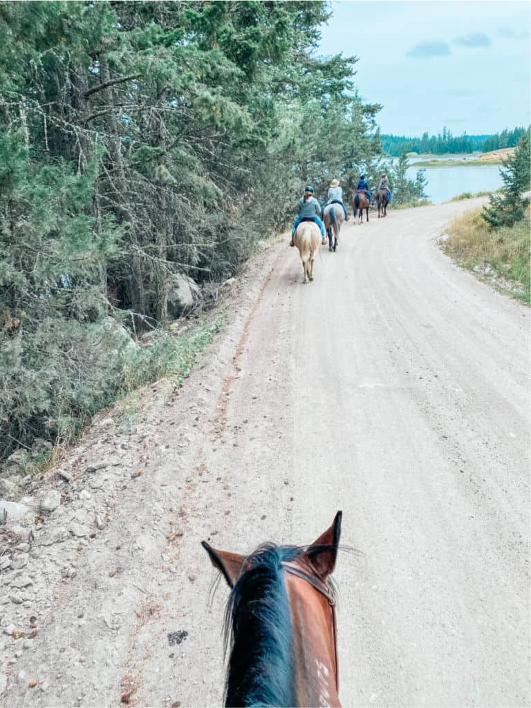 horses ears on trail ride